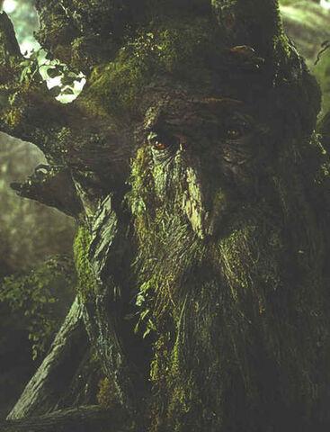 File:Treebeard.jpg