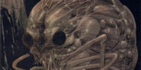 Mollusc