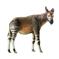 Huge item okapi 01
