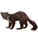 Item pinemarten 01