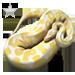 Item albinopython silver 01