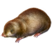 Item giantgoldenmole 01