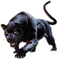 Panther Attacking Animal Image - Huge item blac...