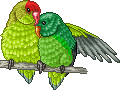 Cariad Agaori Adult