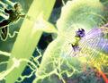 Krona (New Earth) Green Lantern Vol 4 67