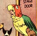Parrot 01