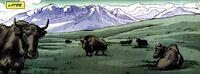 Himalayas 001