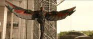 Falcon New Wings