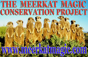The Meerkat Magic Project