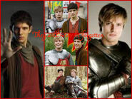 Collage merlin