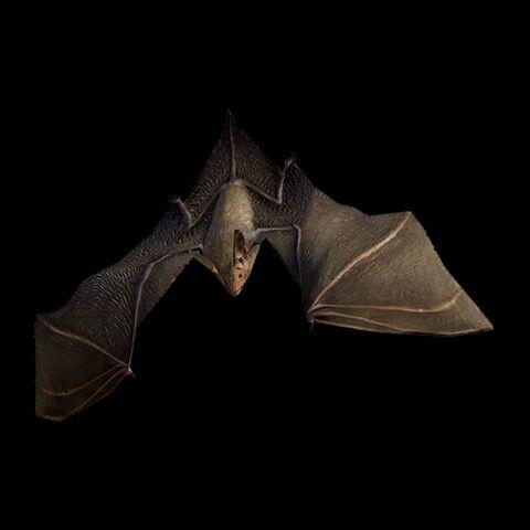 File:Bechstein's Bat.jpg