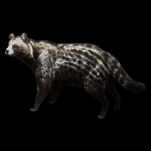 File:African Civet.jpg