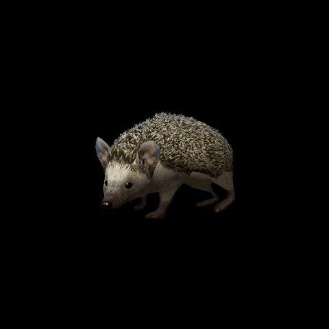 File:Long-eared hedgehog.jpg