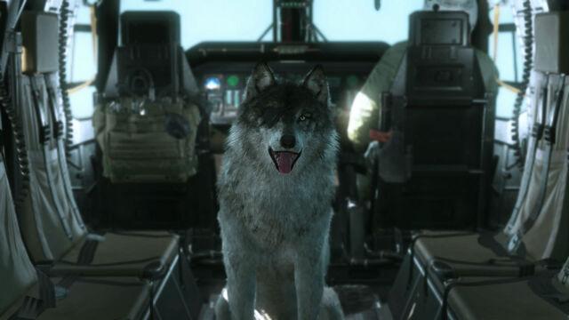 File:Metal-Gear-Solid-V-The-Phantom-Pain-E3-2015-Screen-Chopper-DD.jpg