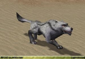 File:Grey Wolf 1.jpg