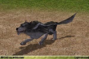 File:Alpha Wolf 1.jpg