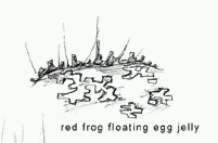 Frog jelly