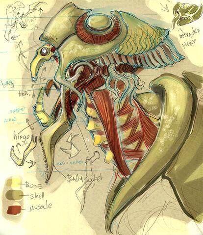 File:Flagra side head.jpg