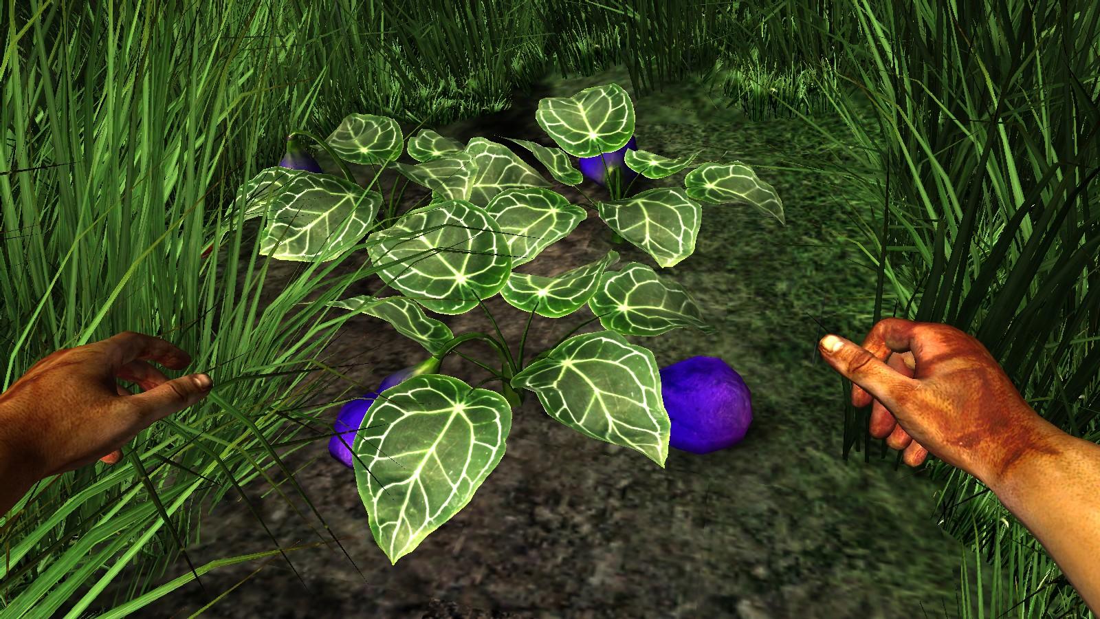 Fleshy Purple Fruit | Miasmata Wiki | FANDOM powered by Wikia