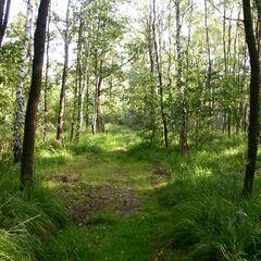 <center>Acrestian National Nature Reserve</center>