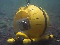 File:Seahorse.jpg