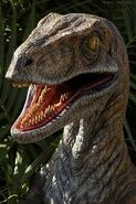 Jurassic Park Velociraptor