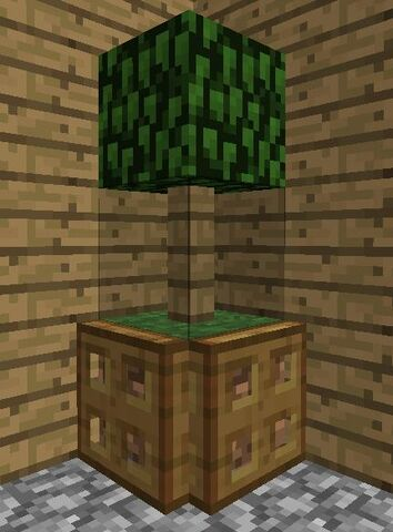 File:Indoor tree.jpg