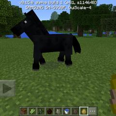 A Black Horse