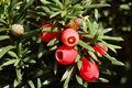 Eibe Frucht I DSC 9403.jpg
