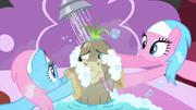Spa ponies scrubbing Cranky S2E18