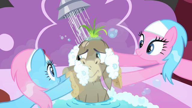 File:Spa ponies scrubbing Cranky S2E18.png