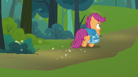 Scootaloo looking around S3E06