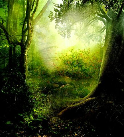 File:Enchanted Forest Premade by frozenstocks.jpg
