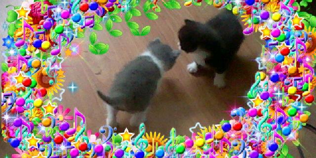 File:Bronyboybro cats 2.jpg