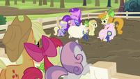 Applejack, Apple Bloom and Sweetie Belle watching pigs S2E05