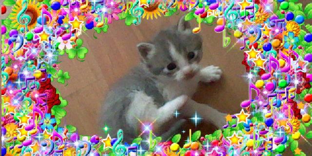 File:Bronyboybro cats 9.jpg