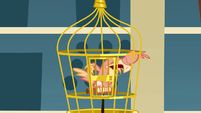 Philomena coughing in her cage S01E22