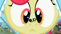 Apple Bloom with bee on nose 2 S2E12