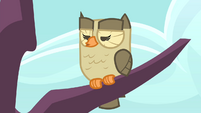 Owlowiscious hooting unamusedly S4E23