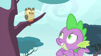 Spike looking hopeful at Owlowiscious S4E23