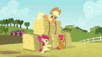 Apple Bloom 'We were so busy with that obstacle course' S3E08