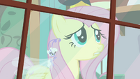 Fluttershy and Breezie looking out window S4E16