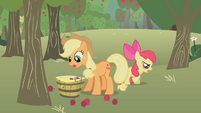 Applejack picking up apples S1E12