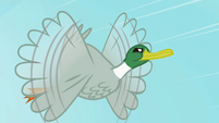 Duck flying S2E07