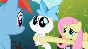 Fluttershy showing cat to Rainbow Dash S2E07