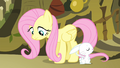 Angel and Fluttershy S4E14.png
