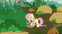 Fluttershy brings the turtle to safety S5E23