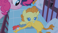 Pinkie Pie setting her down S2E13.png