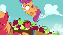 Big Mac pulls cart; Scootaloo about to fall S6E4