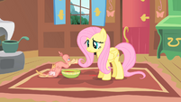 Fluttershy and Philomena2 S01E22